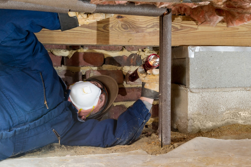 building-pest-Inspection