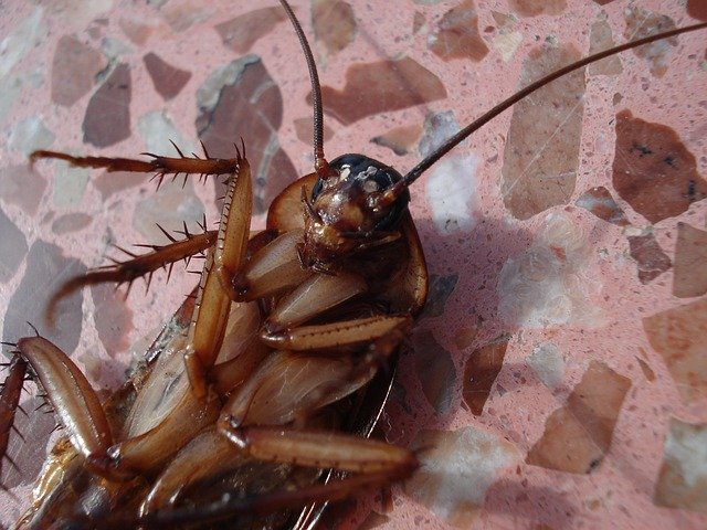 Cockroach Treatment Melbourne & Cockroach Pest Control Melbourne