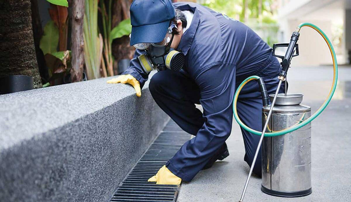 The History and Science of Pest Control Melbourne Australia