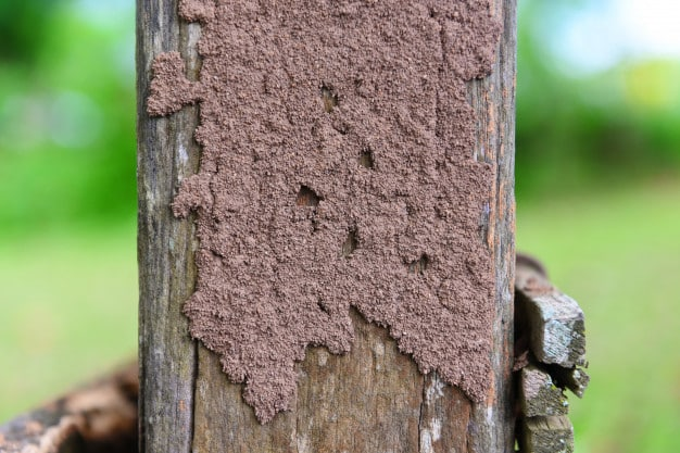 Termite Control Services Melbourne | White Ant Protection Melbourne