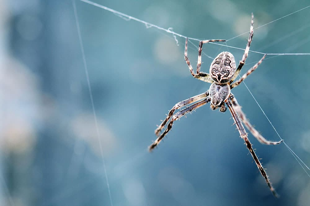 Spider Control Treatment Melbourne | Wolf Spider Treatment Melbourne